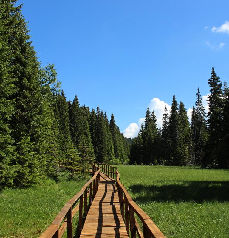 Woodside Kopaonik: Leto i aktivni odmor na planini